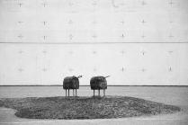 schwarze Schafe - St. Canisius