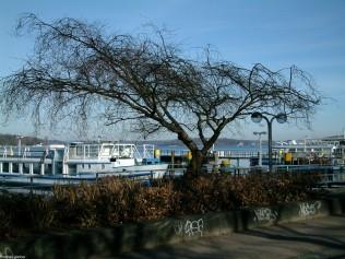 berlin wannsee-havel-DSCF0067
