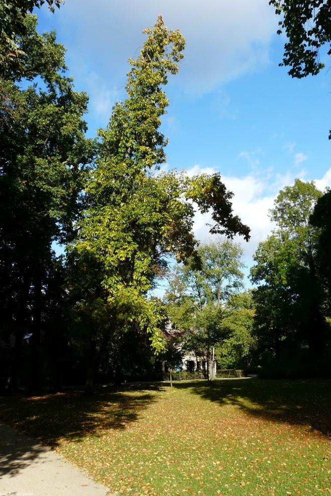 branitz landschaftspark -P1030613