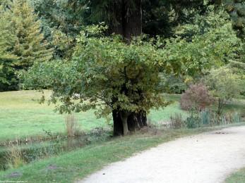 branitz landschaftspark -P1030650