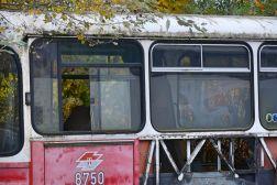 alte Busse-foto gielow 12