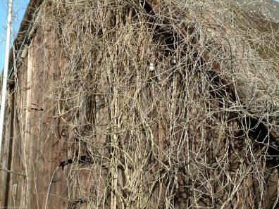 kladow tom.2012-11
