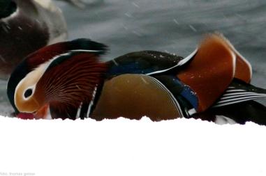 mandarinente-06