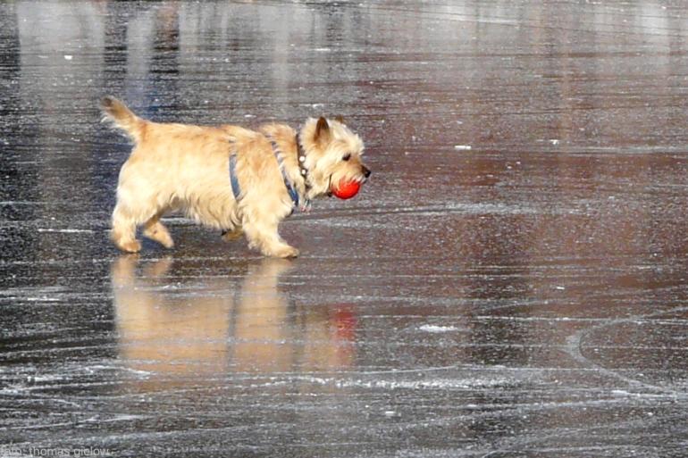 hund-mit-ball-eis
