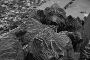 Wildschweine - Spandauer Forst