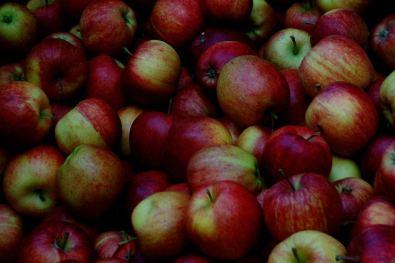 dense apple