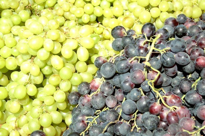 dense grapes