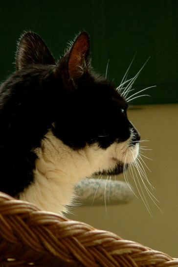 our_cat 02