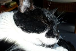 our_cat 05
