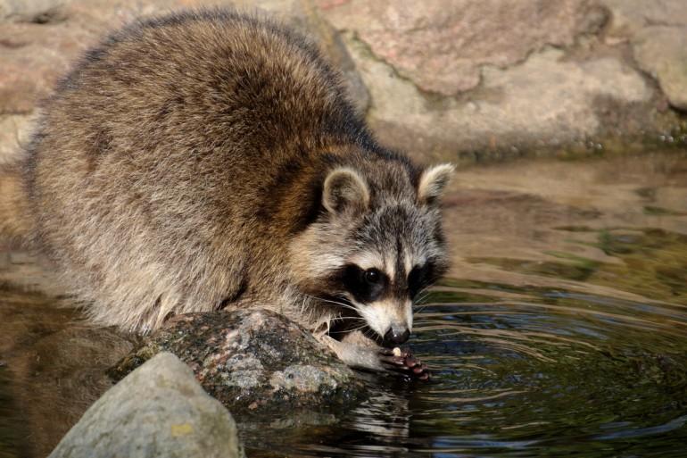 040d8973c84148 Tiere im Wildpark Schwarze Berge – Tom. Fotoblog